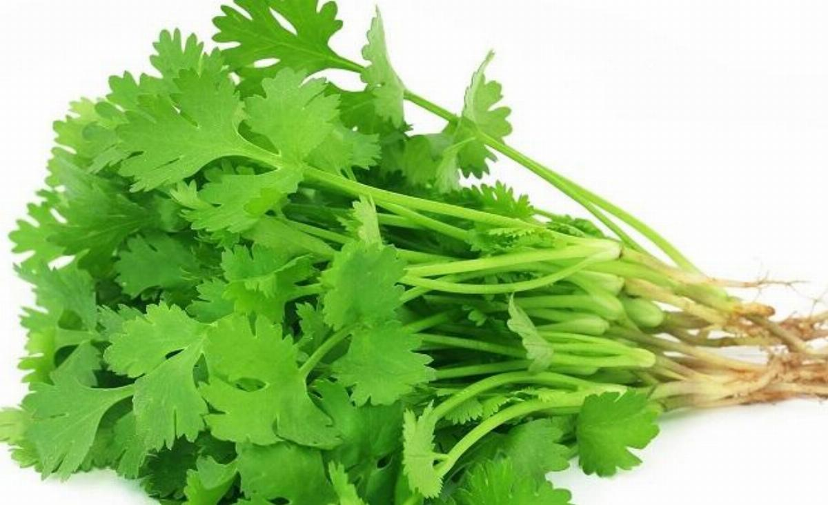 Benefits of Coriander