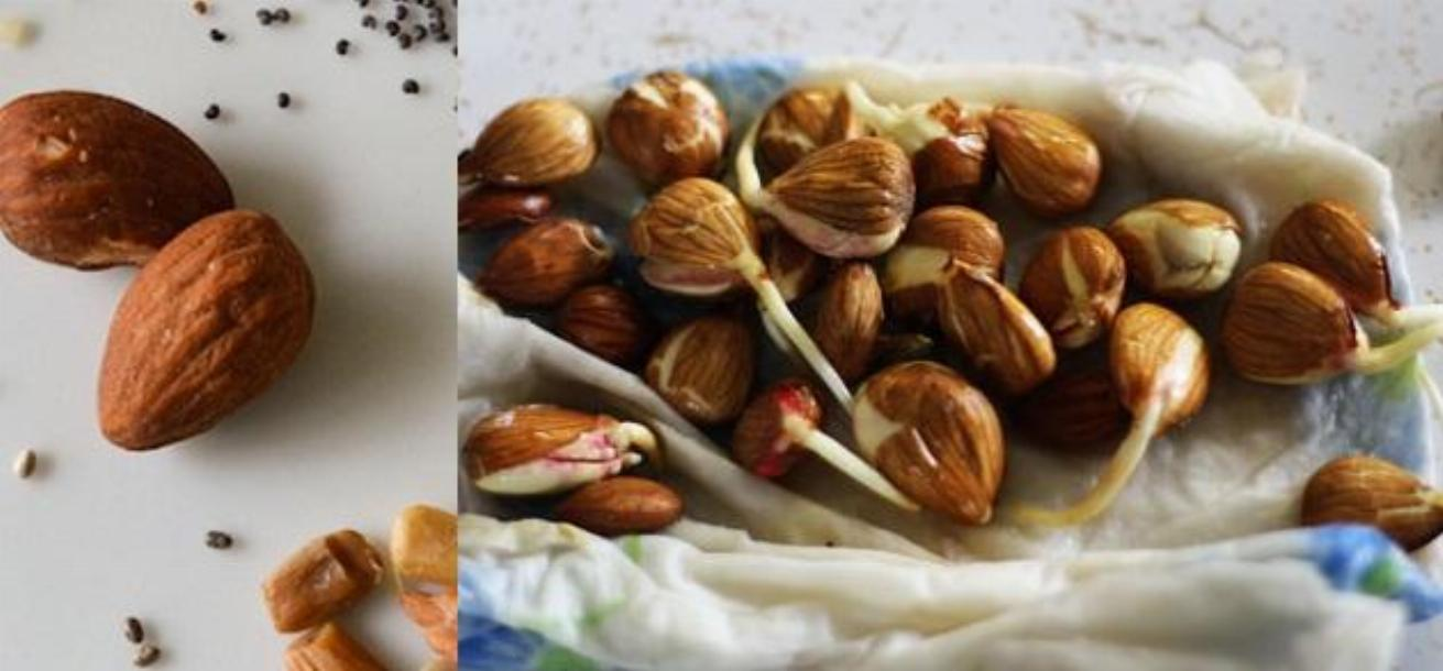 Nuts Sprouting Benefits
