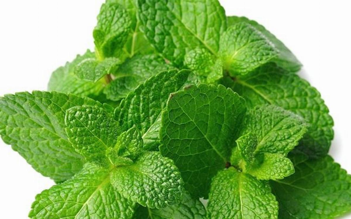 Benefits of Pudina (Mint)